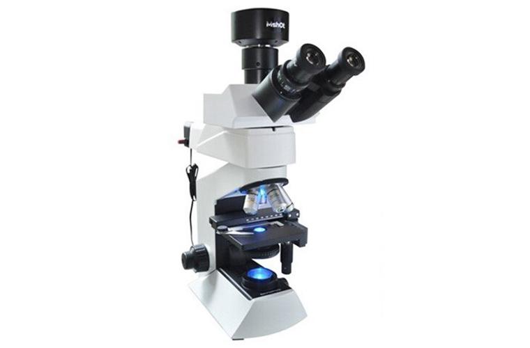 LED荧光显微镜在间接免疫荧光中的应用