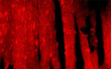 明美倒置荧光显微镜MF53+研究级显微镜相机MSX2-H+透明热台走进西南医科大,应用于活细胞研究领域
