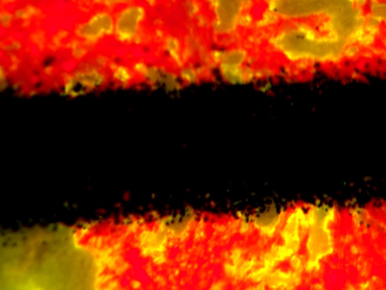 明美体视荧光显微镜应用于朱墨时序鉴定