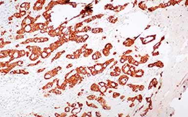明美显微镜相机助力华中科技大学研究项目发表