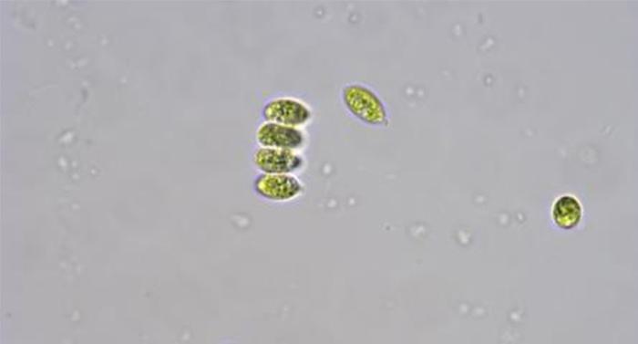 明美生物显微镜及显微数码相机应用于广西师范大学水质监测