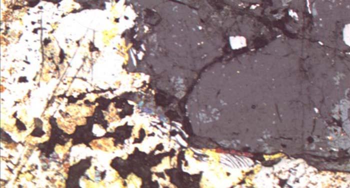 荧光显微镜|显微镜摄像头|显微镜接口MD90与奥林巴斯显微镜GX51的完美结合