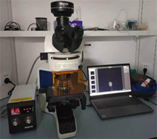 明美荧光显微镜助力脑科学研究