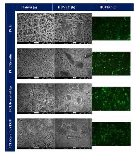 明美倒置荧光显微镜助力科研人员勇登SCI期刊4.jpg