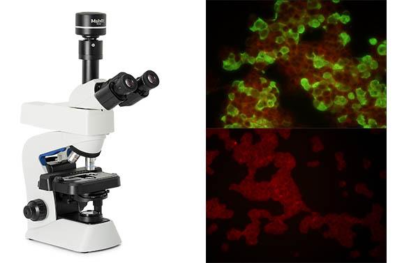 明美荧光显微镜的应用