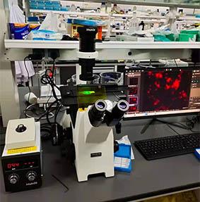 复旦大学荧光显微镜.jpg