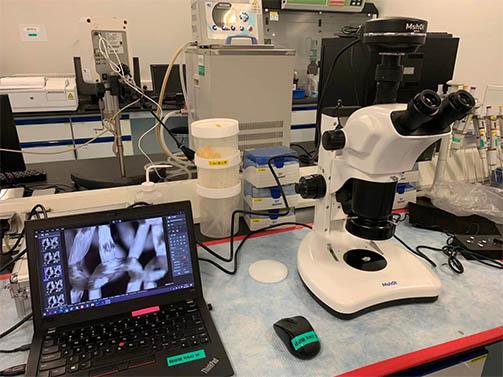明美体视显微镜用于手术缝合纤维材料立体效果观察
