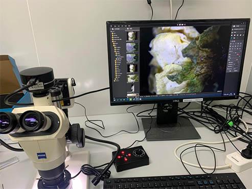 显微成像系统在中药鉴定中的应用