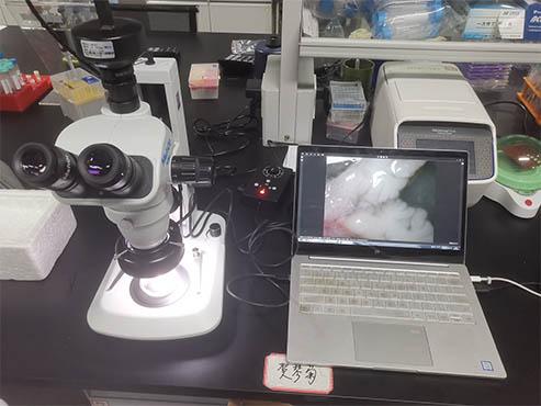 体视显微镜助力湖南大学小鼠组织观察