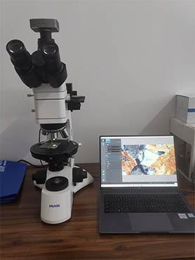 微观岩石|偏光显微镜下的美