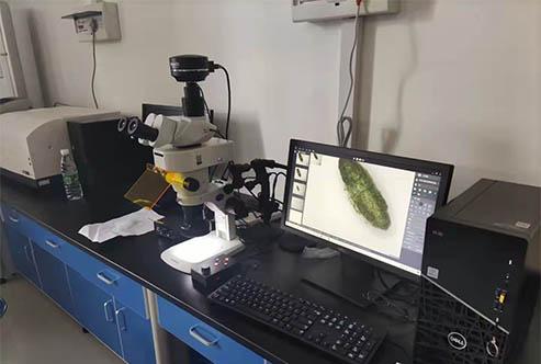 体视荧光显微镜助力河南科技大学昆虫观察
