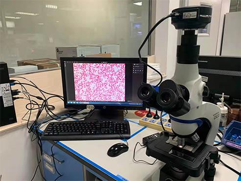【显微镜相机】如何用电脑保存光学显微镜目镜下的细胞图